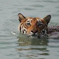 Royal Sunderban With Exotic Kolkata Package
