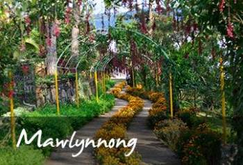 Day Trip Mawlynnong & Dowki Full Day Tour Timing 8 to 9 Hours