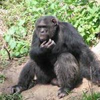 Wildlife Tour of Kenya