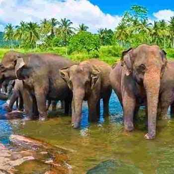 Sri Lankan Spice Tour