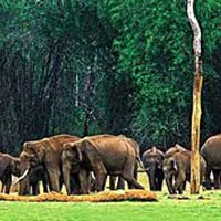 Kerala Wildlife Tour 6 Days Nights Periyar Kumarakom