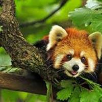 Himachal Pradesh Wildlife Tours
