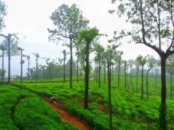 6 Days Kerala Fantastic Tour