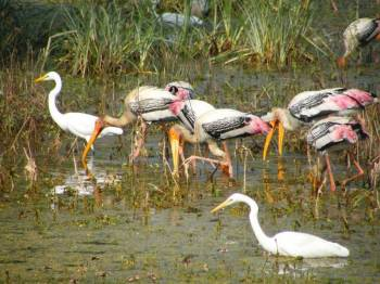 A Tour to Keoladeo National Park