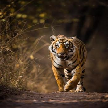 Golden Triangle Tour With Jim Corbett National Park