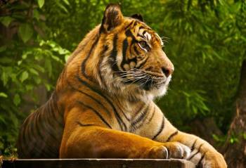 Golden Triangle Tour with Ranthambore Package