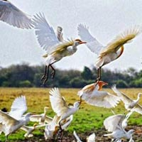 Golden Triangle with Birds Tour
