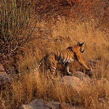 Jaipur - Ranthambhore(2N/3D) Tour