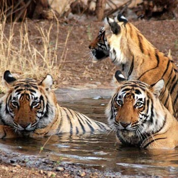 Ranthambhore National Park 2N/3D Tour