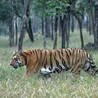 Pench National Park ( M.P) 2N/3D Package
