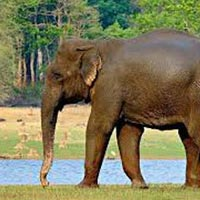 Manas National Park 2N/3D Package