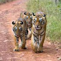 Tadoba National Tour 3N/4D