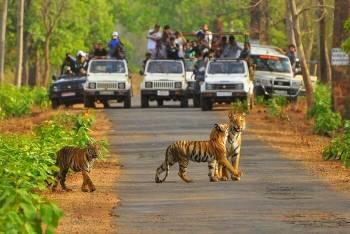 Jaipur-Ranthambore Tour