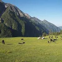 Shimla - Chanshal Tour