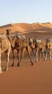 Beauty Of Rajasthan Package