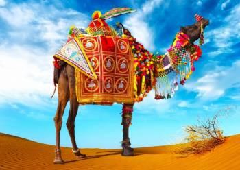 Caultural Rajasthan Tour
