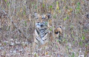Kabini, Bandipore,Madhumalai National Park ,With Ooty Tour
