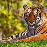Rishikesh Wildlife Packages