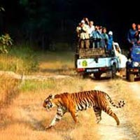 Brocher Of Chilla Zone Safari Tour