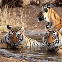 Haldupadav  Safari( Corbett National Park) Tour
