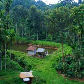 Mysore/ Ooty/ Coorg Package for 3 Night 4 Days
