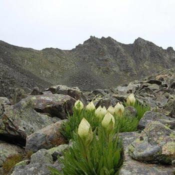 Hanyaa Peak Climb Tour