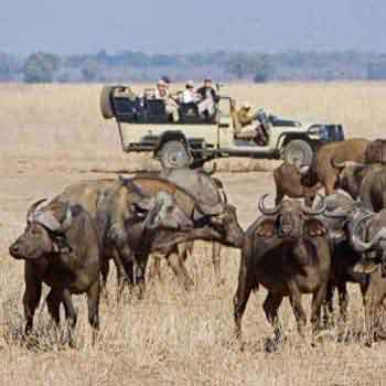 South Luangwa Lower Zambezi & Kafue National Park Safari Package