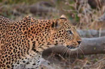 4 Days South Luangwa National Park – Luxury Package