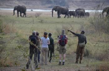 Walking Safari in South Luangwa National Park