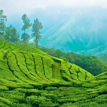 Queen Of Hills Kerala Tour