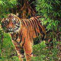 Royal Land Of Bengal Tigers Tour