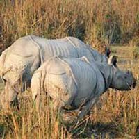 Wildlife Of Kaziranga Tour