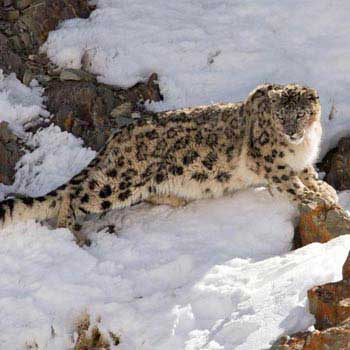 Wildlife Tours In Ladakh Package