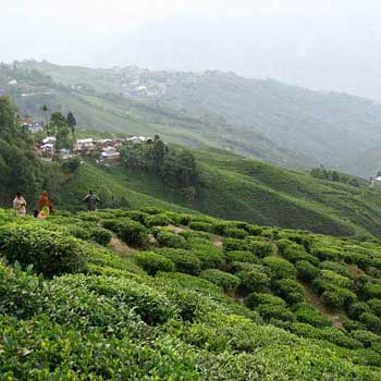 Darjeeling Bagdogra Packages