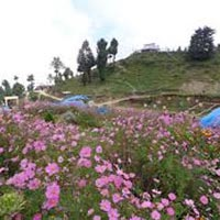 Delhi-Kasauli Weekend Tour