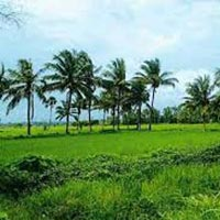 Green Kerala Package