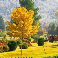 Kashmir Soulful Package 3 Nights 4 Days