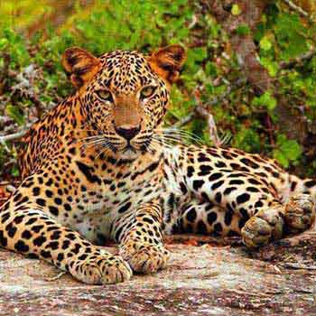 Sri Lanka Wild Life Trip Package