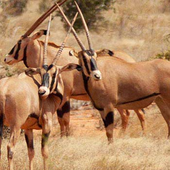 Samburu Safari - 3 Days Package