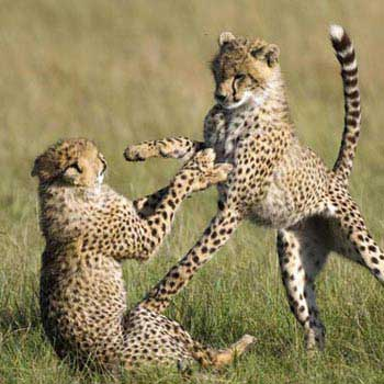 Amboseli National Park - Lake Naivasha & Masai Mara In 6 Days Tour