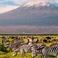 Amboseli - Lakes Naivasha & Nakuru - Masai Mara - 7 Days Safari Kenya Tour