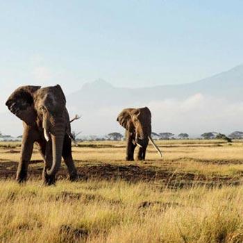 Amboseli, Lake Naivasha, Lake Nakuru, Masai Mara - 8 Days Discover Kenya Safari Tour