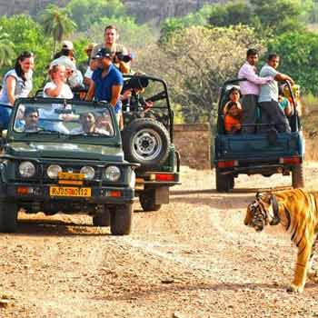 Corbett Wildlife Safari Tour