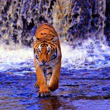 Sunderban Wilderness Tour