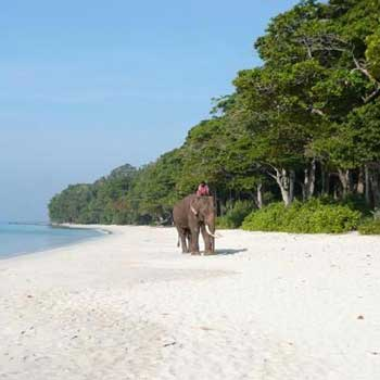 Romantic Radhanagar Beach And Elephant Beach Tour