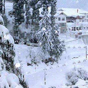 Delightful Shimla Tour