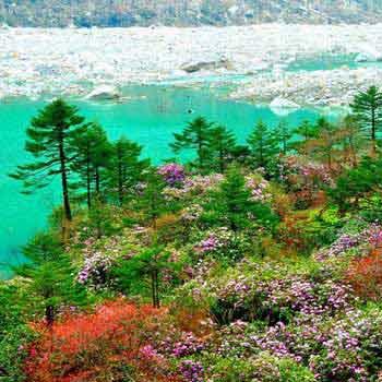 Gangtok Darjeeling Kalimpong Tour