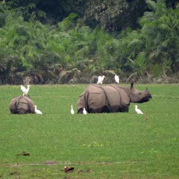 Meghalaya Wildlife Tour