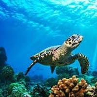 Discover Andaman Trip Tour