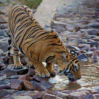 Ranthambore Tiger Safari Tour Package